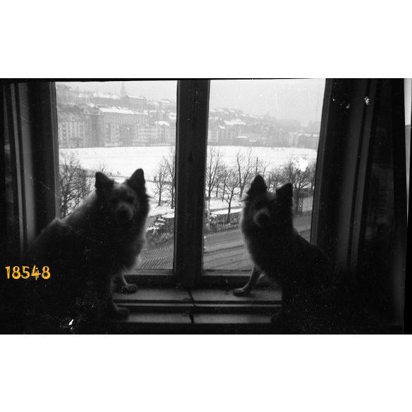 Vérmező, Krisztinaváros az Attila út Mikó utca sarki lakásból fényképezve, kutyák az ablakban, Budapest, 1930-as évek, Eredeti fotó negatív!