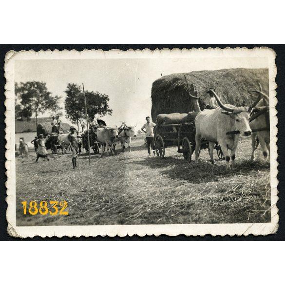 Kunhegyes, ökrösszekér, aratás, falu, mezőgazdaság, 1930-as évek, Eredeti fotó, papírkép.