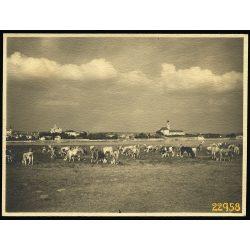 Vác látképe, a Szentendrei-szigetről, Duna, város, tehéncsorda, mezőgazdaság, 1938, 1930-es évek, Eredeti fotó, papírkép.