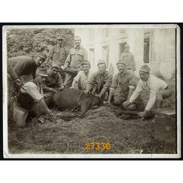 'Tábori ló operáció', magyar K.u.K. katonák, 1. világháború, egyenruha, Kutkorz (Kutkir), orosz front, 1915, 1910-es évek, Eredeti fotó, papírkép.